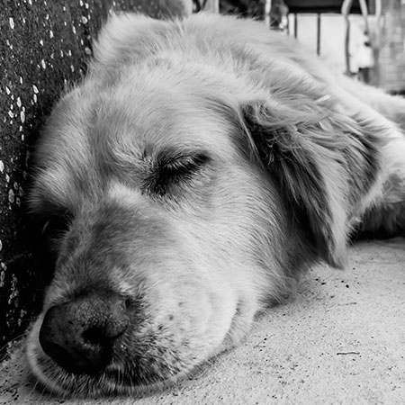 Considering-Euthanasia-for-Your-Pet